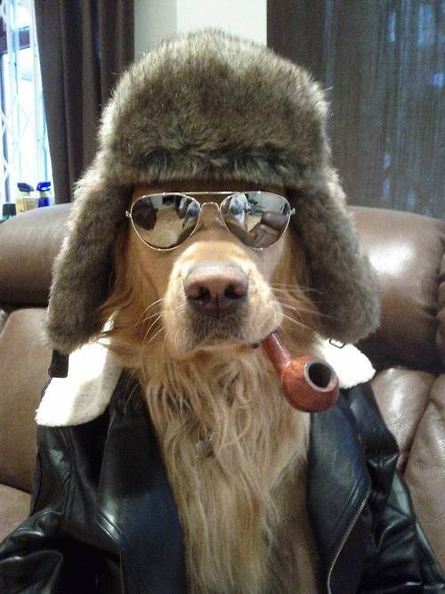 funny weird hipster dog Sweetbob's hipster music playlist