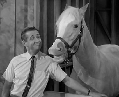 Mr-Ed-Horse-Betting-Gambling
