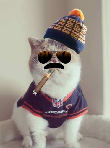 funny-2016-americas-white-boy-picks-sgainst-spread-nfl-gambling-kitty-cat-photo